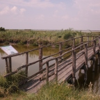 Birdwatching, Parco Delta del Po (Emilia Romagna – Italy)